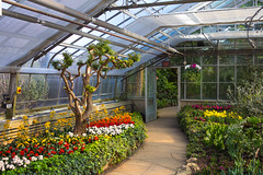 Add some colour to Blue Monday @ Centennial Park Conservatory (A Great Capture) Tags: green colourful colorful walk walkway path greenhouse garden vibrant agreatcapture agc wwwagreatcapturecom adjm ash2276 ashleylduffus ald mobilejay jamesmitchell toronto on ontario canada canadian photographer northamerica winter l'hiver indoor indoors inside warm light sunny yellow red white flower flowers plant plants tree door stone stones rock rocks urnanature natur nature naturaleza natura naturephotography cheerful vivid bright torontoexplore etobicoke centennial park conservatory urban life 2016
