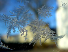 Ice Flowers (chromaticographie) Tags: makro lx7 eisblumen ice flower