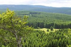 Blick zum Brocken (ullameier) Tags: brocken wandern aussicht wald sonne wind fichten bäume wiese weite sicht