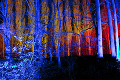 Winter Lights 2016 049 (dblaikiephotography) Tags: nighttime colour nationaltrust angleseyabbey winterlights