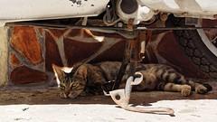 Chat en pleine ombre (flodub) Tags: sicile cefalu ombre couleur scooter italie chat cat colorful bike