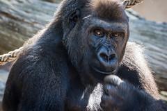 Taronga Zoo (Jeremy Denham) Tags: zoo anamals tarongazoo