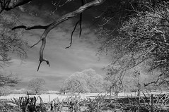 A North Yorkshire village. (johnhjic) Tags: johnhjic nikon d90 ir helperby northyorkshire field wood woodland woodlands sky cloud clouds blackwhite black white england english