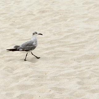 Beach day  Follow @jet7black and @jet7black_wildlife On IG  Follow Me On  Facebook:Jet7Black  Flickr:jet7black  Twitter:Jet7Black
