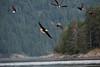 British Columbia Luxury Fishing & Eco Touring 47