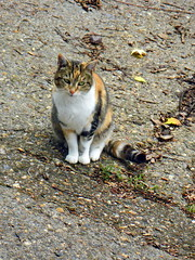 IMGP1001 (d_fust) Tags: paris cat frankreich kitten gato katze  macska gatto fust kedi  anak katt gatito kissa ktzchen gattino kucing   katje  kaze    yavrusu