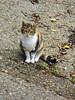 IMGP1001 (d_fust) Tags: paris cat frankreich kitten gato katze 猫 macska gatto fust kedi 貓 anak katt gatito kissa kätzchen gattino kucing 小貓 고양이 katje кот kaze γάτα γατάκι แมว yavrusu 仔猫 का बिल्ली बच्चा