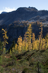 20151003-IMG_9875 (Ken Poore) Tags: washington hiking cascades larches northcascades geolocation maplepassloop geocity camera:make=canon exif:make=canon goldenlarches geocountry geostate exif:lens=ef24105mmf4lisusm exif:aperture=ƒ80 exif:model=canoneos6d camera:model=canoneos6d exif:focallength=35mm exif:isospeed=160 geo:lon=12076633666667 geo:lat=48508266666667