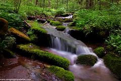 LittleBranch+1_7569_TCW (nickp_63) Tags: green nature water creek forest outdoors clyde nc rocks stream long exposure branch little den north falls carolina mossy harmon platinumheartaward