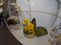 Feather Reed Grass, Canna Leaves & Wild Sunflowers by Ruth Christenson of the Koryu School (nano.maus) Tags: fisheye lauritzengardens japaneseflowerarrangement omahabotanicalsociety japaneseambiencefestival
