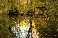 Willow Reflections (Kurt Evensen) Tags: autumn reflection fall norway pond quiet no calm silence tønsberg willowtrees vestfold