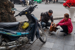 Slaughtering a Chicken on Street - H Ni, Hai Phong, Vietnam (silkylemur) Tags: winter chicken couple asia southeastasia scooter vietnam slaughter fullframe hanoi canoneos asean slaughtering indochina 6d vitnam  2015  wietnam vitnam  hni   canonef24105mmf4lisusm  efmount     vietnamas canon6d      cnghaxhichnghavitnam  ngnam canoneos6d   vietnamesecouple   azjapoudniowowschodnia   vijetnam  mainlandsoutheastasia      ef ef eos6d hnuis      maritimesoutheastasia