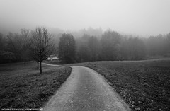 On a cold foggy Morning 2. (andreasheinrich) Tags: november autumn trees blackandwhite cold fog forest germany landscape deutschland moody nebel path herbst felder fields kalt wald bäume stimmungsvoll weg badenwürttemberg blackandwhitephotos neckarsulm schwarzweis nikond7000