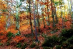Couleurs automnales (mamietherese1) Tags: ngc npc fantasticnature coth coth5 phvalue world100f 200v200c2000v universeofphotography saariysqualitypictures tistheseason