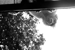 A ver que tienen los turistas (_Galle_) Tags: republica park miguel angel photography monkey mono photo asia republic foto photos south kerala national fotos sur macaco fotografia galle hindu hinduism fotgrafo hindi thekkady periyar fotografa photograper simio gallego inidia  periyarnationalpark hindou republicofindia hind republic hinduismo   gaarjya cheral bhrat bhratgaarjya miguelagallego miguelgallego miguelangelgallego repblicadelaindia cheralam