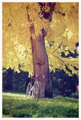 ALEX SINGER (kick-my-pan) Tags: b france bike bicycle french bicyclette ballade vélo boisdeboulogne vintagebike huret vintagebicycle randonneur alexsinger mafac maxicar grandbois idéale jubilée véloancien vélodecollection