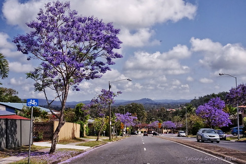 Jacaranda in Brisbane suburbia by Tatters ❀, on Flickr