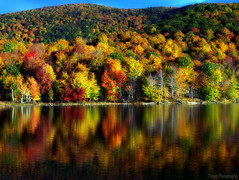 The Loons call over the Water (Captions by Nica... (Fieger Photography)) Tags: autumn lake canada reflection fall nature water forest reflections landscape colorful bright quebec outdoor fallfoliage foliage serene mpdquebec
