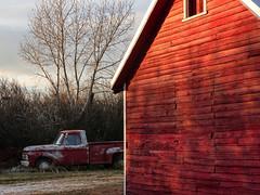 Old-aged matching colours (annkelliott) Tags: old red canada ford barn rural truck outdoor farm alberta vehicle latefall newroof wintry farmyard ruralscene lateautumn likewinter annkelliott anneelliott seofcalgary fz200 sequadrantofcountcircle eofhighriver franklakeandarea highriverchristmasbirdcount fz2003 annualaudubonchristmasbirdcount2015 15december2015 farmthathadthekittensin2014 waspinkayearago