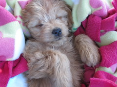 nyla-grace-sleeping-on-the-5-hour-trip-homenot-a-care-in-the-world---shes-one-of-gracie-and-chewys-girls-_4495670412_o