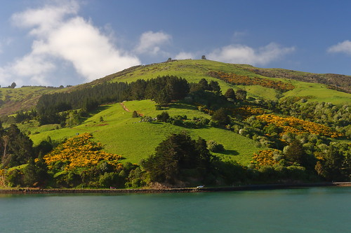 Countryside Gliding By While Sailing From Port Chalmers New Zealand