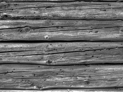old trunk (Tonio06fr) Tags: ancient natural larch tree blackandwhite old house trunk colored lichen wood backgroud rustic mountain