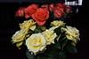 DSC_4254 (PeaTJay) Tags: nikond750 reading lowerearley berkshire macro micro closeups gardens indoors nature flora fauna plants flowers rose roses rosebuds