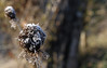 HIVERN I FRED (Joan Biarnés) Tags: pladelestany macro fred frio 213 canon7d
