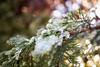 Icy nature (Tommaso Gorla) Tags: ice iced icy ghiaccio freddo ghiacciato inverno outdoor frozen natura nature winter