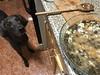 Magic mind exercise (VanaTulsi) Tags: vanatulsi weim weimaraner dog blueweim blueweimaraner