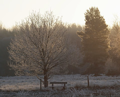 2016_12_0519 (petermit2) Tags: winter frost clumberpark clumber sherwoodforest sherwood nottinghamshire nationaltrust nt