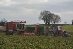 Agrifac WKM 9000 Self Propelled Beet Harvester filling tops to a Thorpe Trailer drawn by a Case IH Puma 165 Tractor (Shane Casey CK25) Tags: agrifac wkm 9000 self propelled beet harvester filling tops thorpe trailer drawn case ih puma 165 tractor cnh casenewholland midleton red sugarbeet sugar fodder fodderbeet winter feed county cork ireland irish farm farmer farming agri agriculture contractor field ground soil earth cows cattle work working horse power horsepower hp pull pulling cut cutting crop lifting machine machinery nikon d7100 traktor tracteur traktori trekker trator ciągnik crops collecting collect