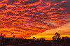 Sunset Wave (http://fineartamerica.com/profiles/robert-bales.ht) Tags: facebook photouploads sunrise sunset redsky sunrays twilight yellow clouds landscape panoramic southwestphotography beautiful sensational spectacular sceniclandscapephotography desertphotography awesome magnificent peaceful surreal sublime magical spiritual inspiring inspirational path morning haybales silhouette scenic arizonaphotography sunrisephotography red sonoradesert robertbales desertecosystem desert nature sky yuma sun palmtree foothills wave