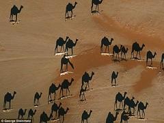 صورة التقطت في صحراء عمان تحيّر رواد مواقع التواصل (ahmkbrcom) Tags: عُمان