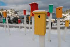 Newfoundland Bird Houses (Dolores Harvey) Tags: bird houses doloresharvey d800 newfoundland nikon newfoundlandlabrador colourful row brigus atlanticocean ocean oceanview snow posts canvassingtheneighbourhood canvassingtheneighbourhoodphotography canada yellow yellowhouses redhouses greenhouses rowhouses community birdhouses