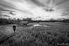 "Rice fields (Ineound) Tags: bali urlaub mzuiko digital 9‑18mm 14‑56 918mmf456 f456 mzd918mmf456 uww sww wide angle mzuiko918 mzuiko918f456 mzuiko918mmf456 olympus micro four thirds mft m43 microfourthirds omd em5 μ43 ""spiegelblickde"" spiegelblickde spiegel blick bw monochrome sw blackwhite schwarzweiss landscape landschaft natur nature nik silver efex ii pro"