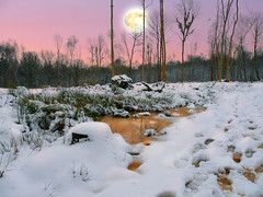 Sparsely beautiful (PhilDL) Tags: moonlight moonrise moon woods wood woodland snow footprints winter sky sunset trees tree botleywoods whiteley hampshire hampshireuk countryside colour colors color colours