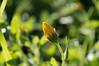 Ψίνθος (Psinthos.Net) Tags: ψίνθοσ psinthos winter january ιανουάριοσ γενάρησ χειμώνασ φύση εξοχή nature countryside χόρτα greens φώσ light sunlight φώσήλιου φώσηλίου σκιά shadow flowers λουλούδια άγριαλουλούδια αγριολούλουδα wildflowers wildflower άγριολουλούδι αγριολούλουδο αχτίνεσήλιου sunrays yellowflowers yellowflower κίτρινολουλούδι κίτριναλουλούδια λουλούδιαχειμώνα winterflowers κιτρινάκια χωράφι field blossom yellowblossom άνθοσ ανθόσ κίτρινοσανθόσ φύλλα leaves