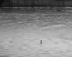 Biking (bjorbrei) Tags: lake ice winter biking maridalen maridalsvannet oslo norway