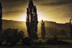Misty Magic (Kevin_Jeffries) Tags: haze misty magical rural nikon nikkor kevinjeffries d7100 farm evening trees tree nature flickrtoday wow