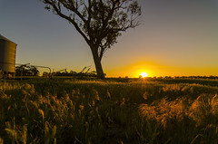 sunset (Indigo Skies Photography) Tags: sunset sun clouds tree trees flower flowers pink orange white green red blue yellow person people light art nature silo farm rural grass world landscape old new country nikond7000 tokina1116mmf28 wideangle