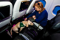 Guide Dogs for the Blind 5 (NickRoseSN) Tags: guidedogsfortheblind guidedogs dogs virginamerica alaskaairlines airline burlingame sanmateocounty sanmateo sanfrancisco sf sfo sfoairport sanfranciscoairport sanfranciscointernationalairport sfbayarea bayarea california ca