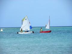 055-DSCN9379 (eric15) Tags: sea beach water race cat for boat eva surf sailing wind offshore sailors luna aruba international dash sail regatta sailor optimist sunfish oranjestad surfside