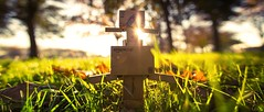Morning sunrise (Art by Vins) Tags: light sun cute grass sunrise toy toys photography exterior bokeh mini kawaii 5d pepsi yotsuba danbo revoltech danboard 5dmkii