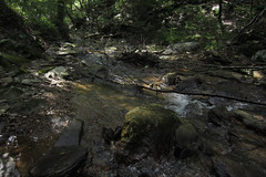 creek (Molly Des Jardin) Tags: park trees light shadow usa sun green water rock stone creek forest flow rocks state pennsylvania stones branches rocky bank sunny running shore fallen lancaster current 2014 susquehannock drumore 43215mm