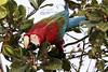 Cirandeira Bela - Manacapuru (Celso Paula) Tags: birds amazonas greenlife redarara bentivi novoairão amazonbirds