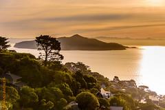 San Francisco (Edi Bhler) Tags: sky lagune plant tree nature clouds sunrise bay natur pflanze himmel wolken waters sonnenaufgang baum contrejour gegenlicht baumstamm gewsser nikond810 24120mmf4 sanfranciscolm 2015hawaii