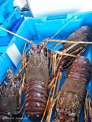 1949  Langostas (Ricard Gabarrús) Tags: mar agua olympus langosta langostas crustaceo crustaceos ricgaba ricardgabarrus