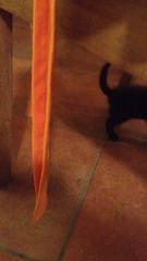Clicquot in casa #cat #pet #blackcat #lovely #chat # # # #kedi # #gato # #cucciolo #paka #blackcat #lovecat #cucciolo #pet #gattonero #tenerogatto #gattino #gattomania (stefola24) Tags: pet cat blackcat chat gato lovely  kedi cucciolo gattino paka lovecat gattonero   gattomania  tenerogatto