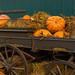 Tivoli gardens - Pumpkins - 1/3